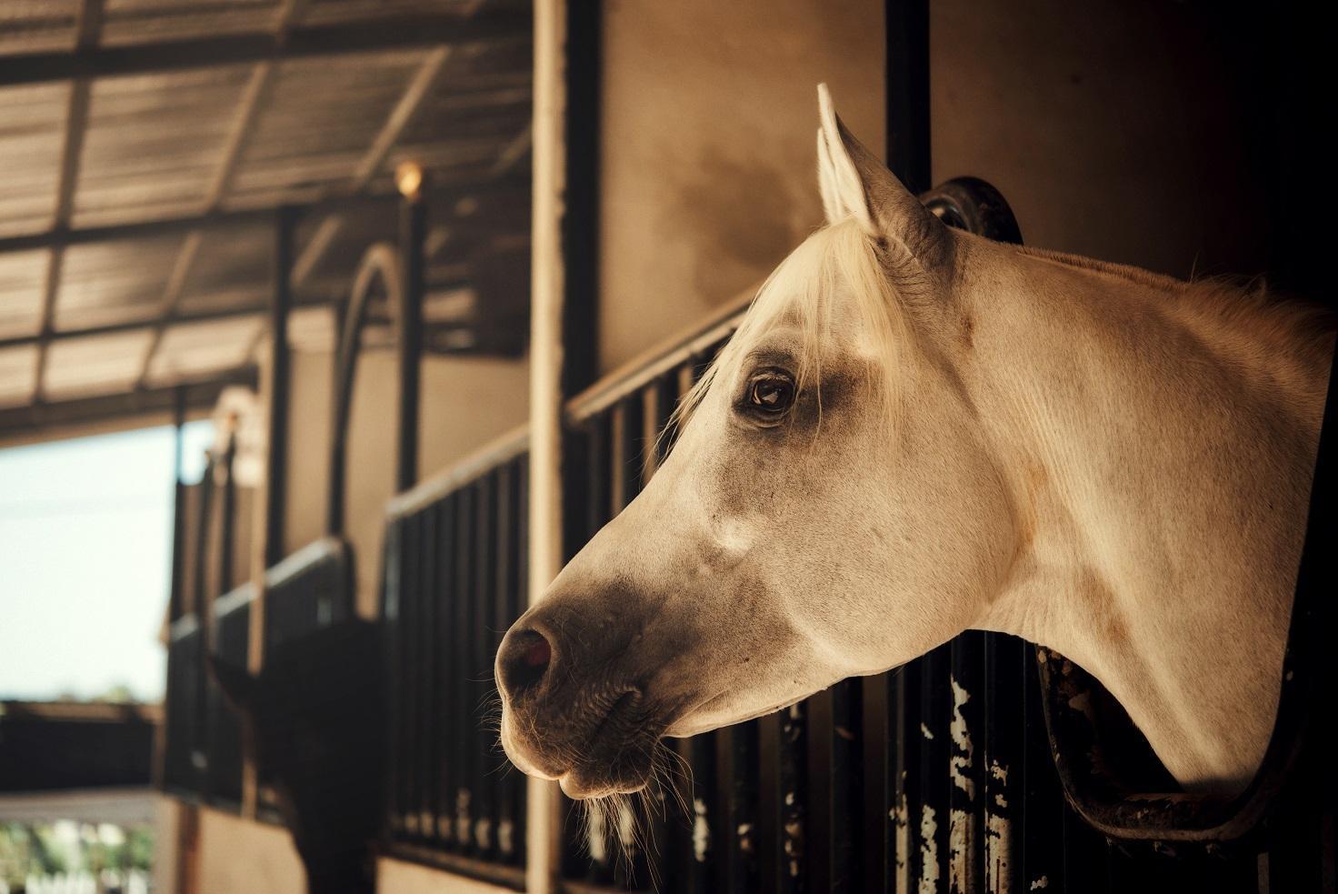 LED paardenstal verlichting. Aangename en duurzame verlichting